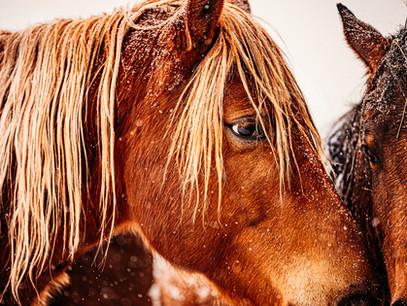 Horses - Snow (1 of 1)-4.jpg