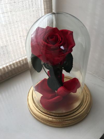 Rosita Bella $100.000.JPG