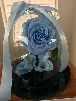 Rosa_Bella_Premium_$150.000_duración_en_