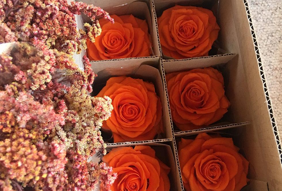 Caja De Rosas Estándar 6 Unidades