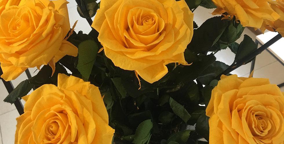 9 Rosas Premium 1