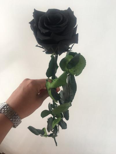 Una rosa Estandar Negra $24.000.JPG