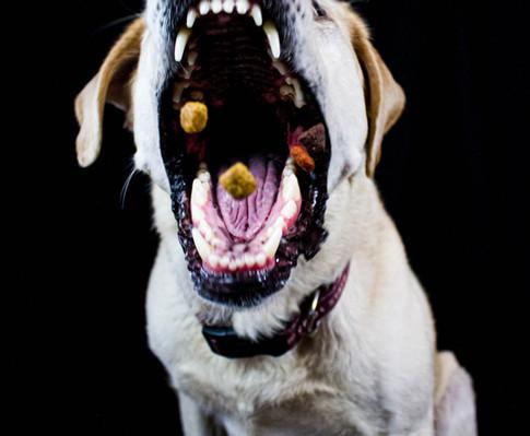 Asheville Dog Photographer