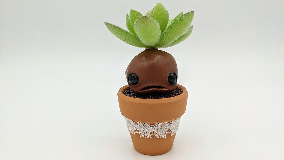 Picky, the small mandrake