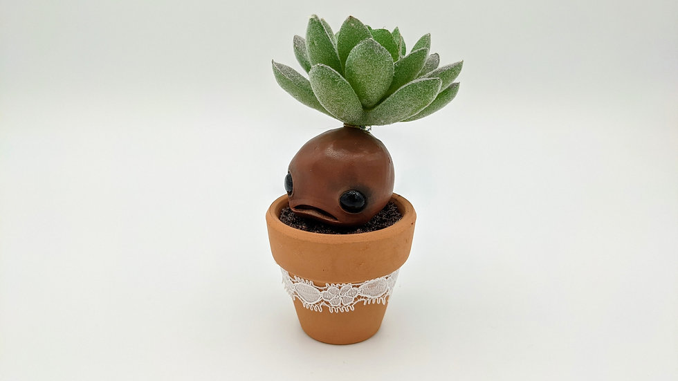 Gordon, the small mandrake