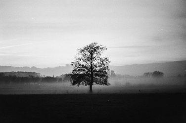 analoog_tree_boom_mist.jpg