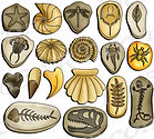 fossil colleciton.jpg