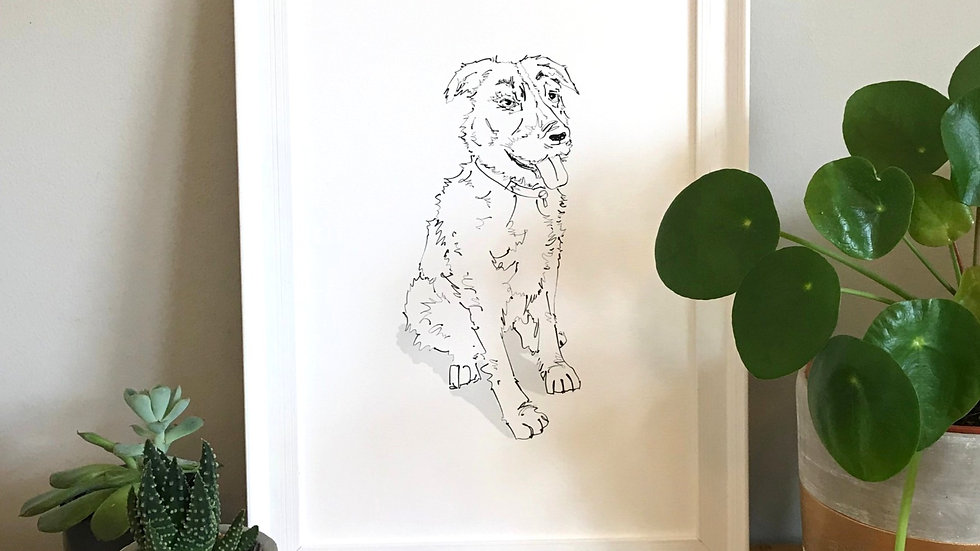 Your pet illustrated
