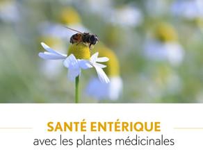Conférence Clé des champs : Plantes médicinales et santé entérique