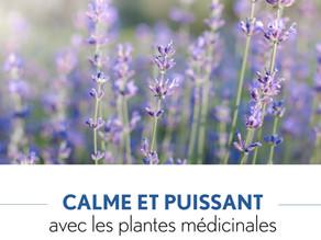 Conférence Clé des champs: Calme et puissant avec les plantes médicinales