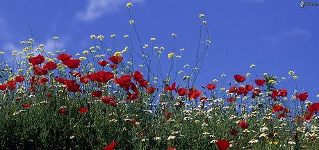 fleurschamps.jpeg