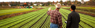 Inovação na Agropecuária