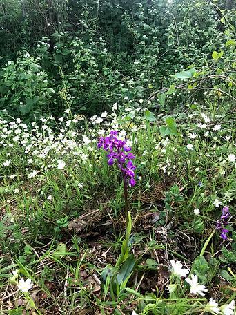 IMG_4315 orchidées.jpg