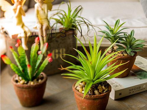 Суккулент на вставке / Succulent 3