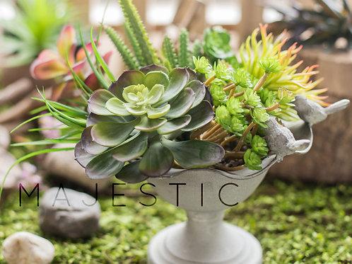Суккулент эхеверия 1 / Succulent echeveria 1