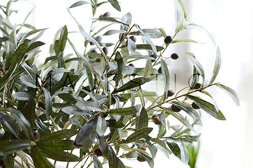 Ветка Оливы с Плодами / Olive Branch with Olives