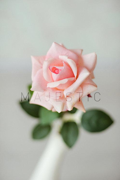 Роза чайная - один бутон / Rose - single flower