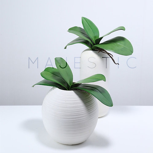 Листья Орхидеи Фаленопсис / Phalaenopsis Leaves