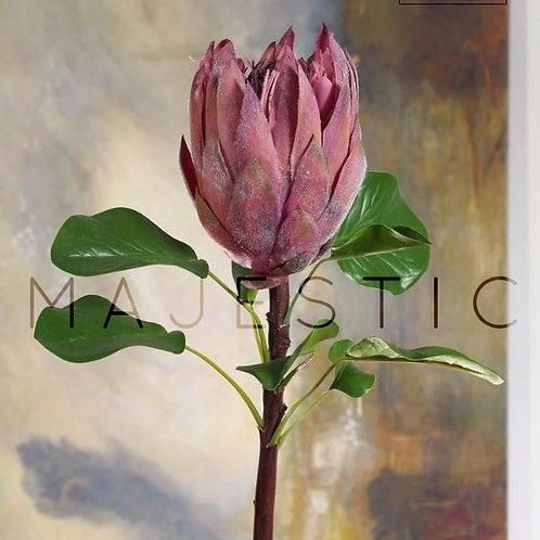 Протея / Protea