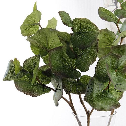Эвкалипт / Eucalyptus