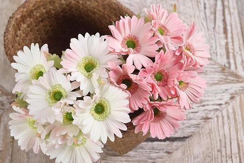 Герберы букет /  Gerbera bouquet