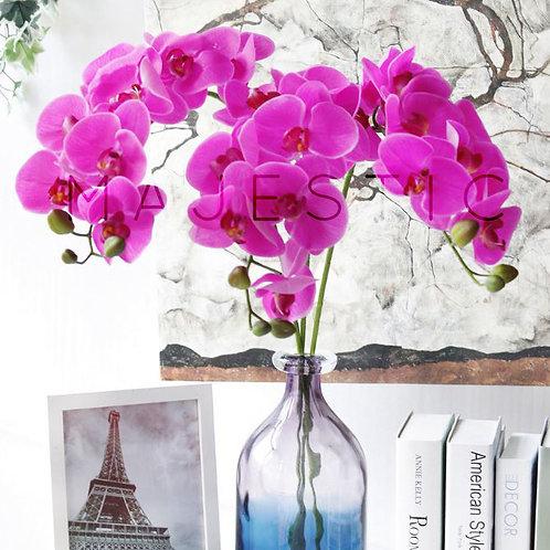 Орхидея Фаленопсис / Phalaenopsis orchid