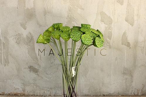 Лотос коробочка / Lotus flower seed pod