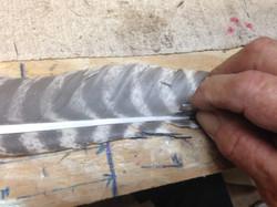 Splitting Feather