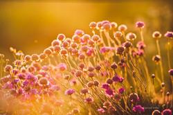 Fleur dans la Palmeraie