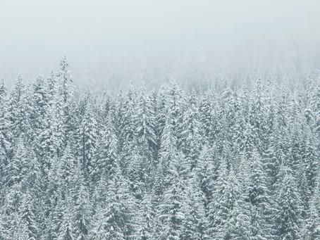 5 Ideen für ein klimafreundlicheres Weihnachtsfest