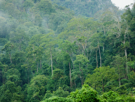 Warum Bäume wahre Klimahelden sind?
