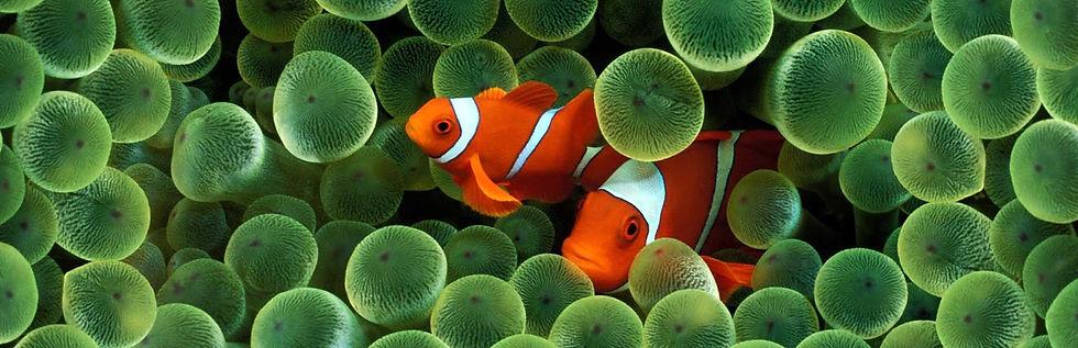 bertoft_headerfishes.jpg