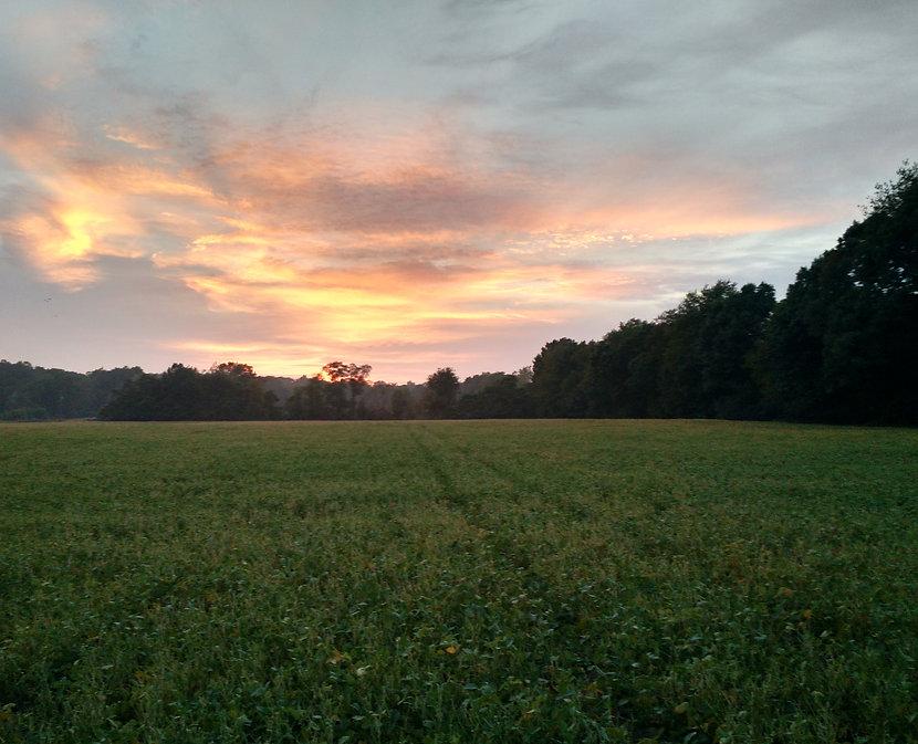 QPM Sunset_edited.jpg