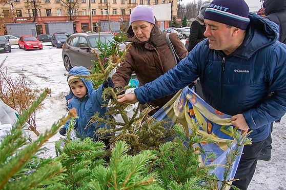 Новогодние елки послужат бездомным животным