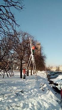 Сотрудники «Южного» начали делать формовочную обрезку лип на площади Победы