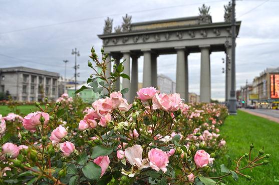 Садовники высадили в Петербурге миллион роз