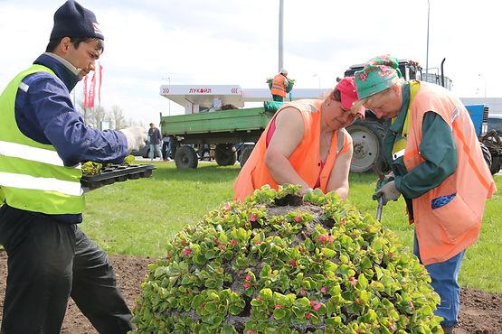 Ко Дню рождения Петербург украсят более 2 миллионов цветов