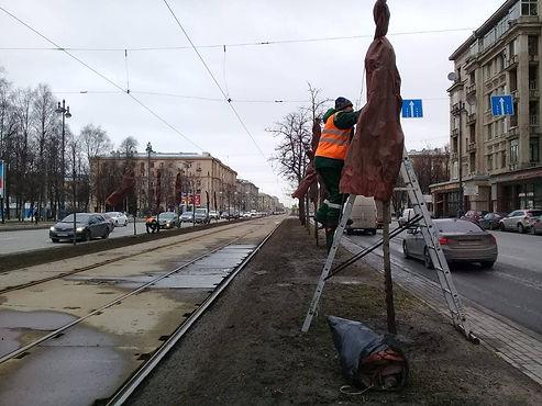 Молодые липы на Московском проспекте благополучно пережили зиму