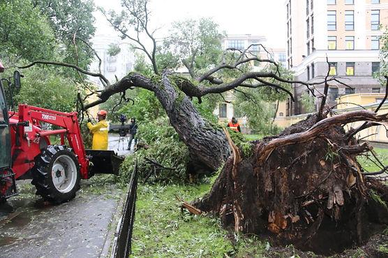 В каждом районе города работают аварийные бригады садово-парковых предприятий