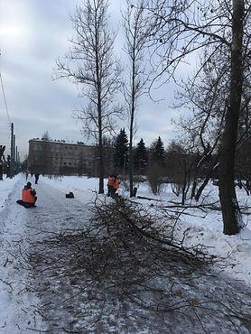Специалисты «Южного» свалили все сухостойные деревья по маршруту ПМЭФ и ЧМ-2018