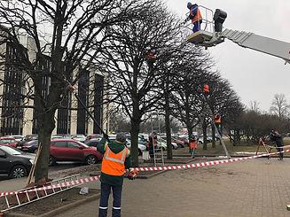 Формовочная обрезка лип на площади Победы