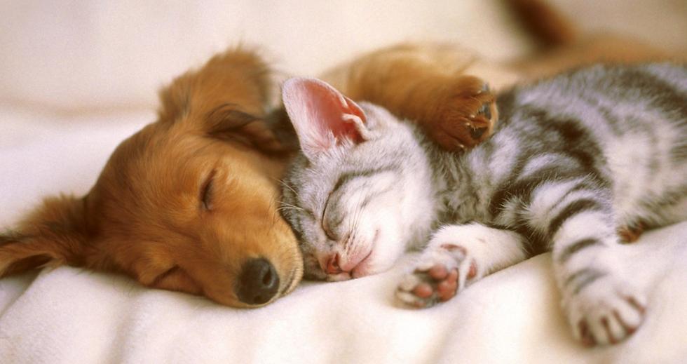 Hello - puppy kitten - sleeping.png