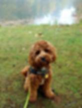 charlie puppy pat brennan.PNG