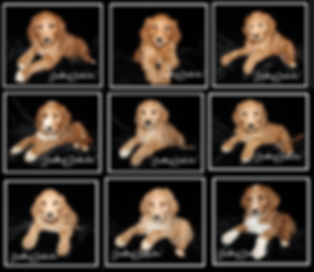 izzys pupps.PNG