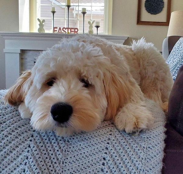 ellie oakly puppy.jpg
