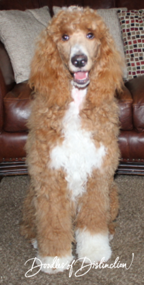 wrigley poodle.PNG