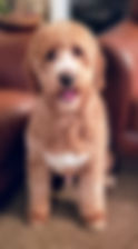 rosco blurred.jpg