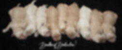 daisys pups day one.PNG