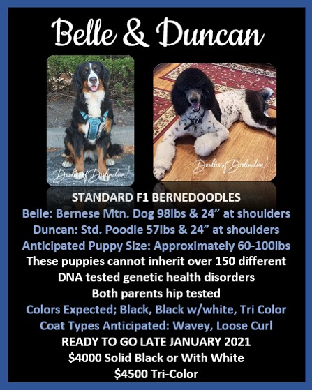 Belle and Duncan postcard.PNG