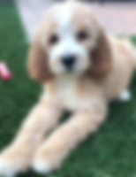 PUPPY WITH WHITE.PNG